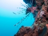 atlantis_dive_college_moalboal_malapascua_evolution_quovadis_2014_diving_philippines-5
