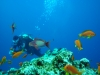 dykresa_red_sea_atlantis_dive_college_dykare_korallfiskar