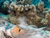dykning-i-red-sea-med-atlantis-dive-college-st-johns-reef-23