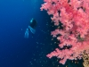 dykning-i-red-sea-med-atlantis-dive-college-st-johns-reef-6