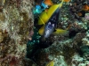 reasea_diving_brotherisland_atlantisdivecollege_atlantis_dive_college_padi_-3