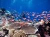 filippinerna_dykresa_atlantis_dive_college_corallfiskar