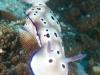 atlantis_dive_college_malapascua_evolution_2014_diving_philippines-1