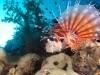 atlantis_dive_college_malapascua_evolution_2014_diving_philippines-2