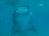 atlantis_dive_college_moalboal_malapascua_evolution_quovadis_2014_diving_philippines-10