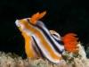 atlantis_dive_college_moalboal_malapascua_evolution_quovadis_2014_diving_philippines-16