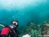 atlantis_dive_college_moalboal_malapascua_evolution_quovadis_2014_diving_philippines-20