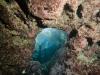 dykresa_till_malta-_med_atlantis_dive_college_2012_vrakdykning-12