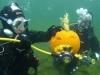 pumpadyk_atlantis_dive_college_pumpkin_dive_dykning_dykare_undervattensbilder-33