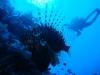 dykresa_red_sea_atlantis_dive_college_dykare_dykare_fisk