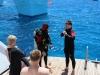 dykning-i-red-sea-med-atlantis-dive-college-2