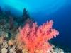 dykning-i-red-sea-med-atlantis-dive-college-st-johns-reef-1