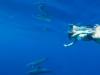 dykning-i-red-sea-med-atlantis-dive-college-st-johns-reef-11