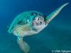 dykning-i-red-sea-med-atlantis-dive-college-st-johns-reef-18