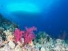 dykning-i-red-sea-med-atlantis-dive-college-st-johns-reef-2