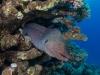 dykning-i-red-sea-med-atlantis-dive-college-st-johns-reef-24