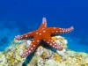 dykning-i-red-sea-med-atlantis-dive-college-st-johns-reef-35