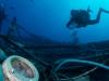 dykning-i-red-sea-med-atlantis-dive-college-st-johns-reef-38
