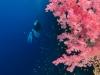 dykning-i-red-sea-med-atlantis-dive-college-st-johns-reef-6
